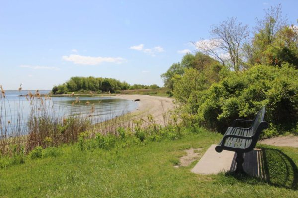 Photograph of a bench overlooking the water on a beach in Warwick